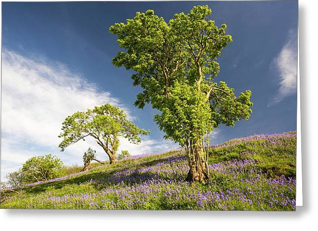 Bluebells Growing On A Limestone Hill Greeting Card