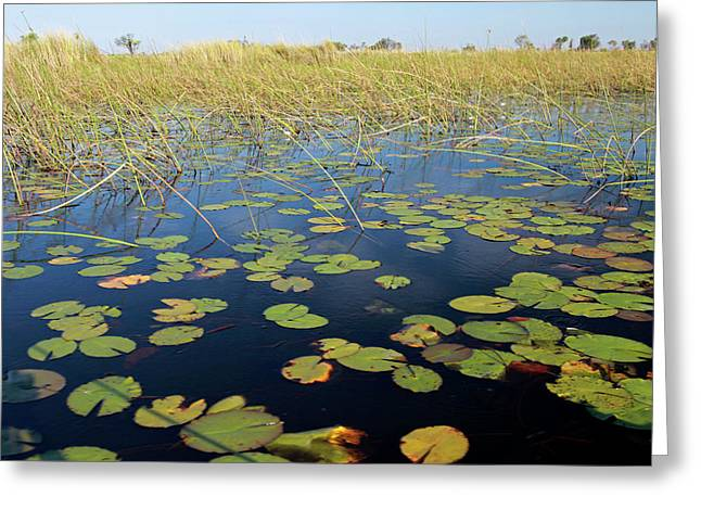 Botswana, Okavango Delta Greeting Card by Kymri Wilt