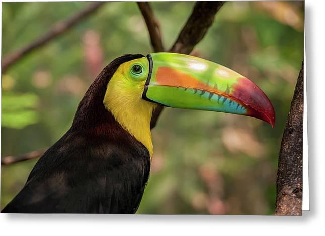 Central America, Honduras, Roatan Greeting Card by Jim Engelbrecht
