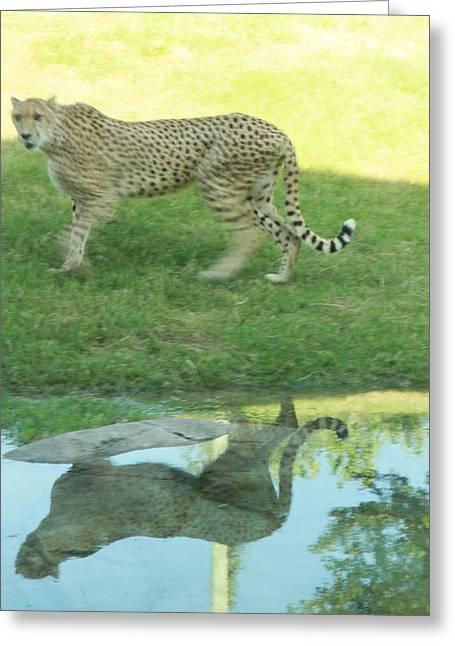 Cheetah Greeting Card by Tinjoe Mbugus
