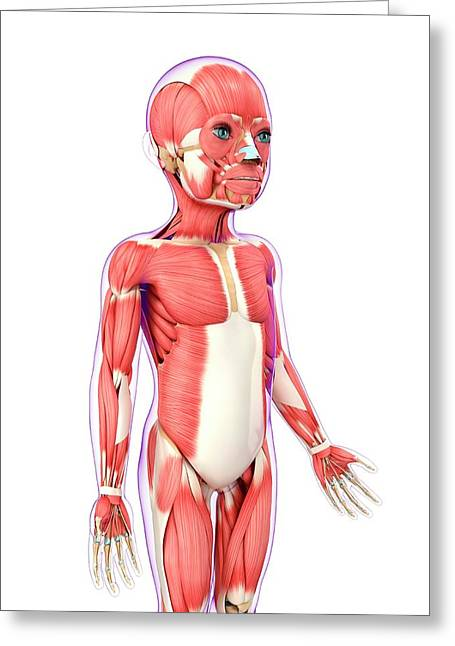 Child's Muscular System Greeting Card