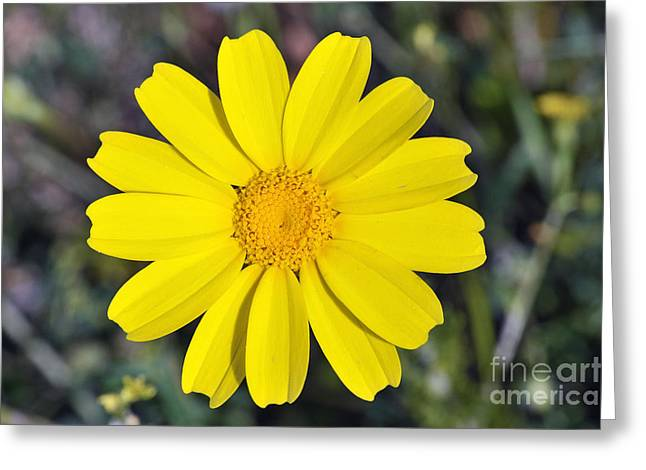 Crown Daisy Flower Greeting Card by George Atsametakis