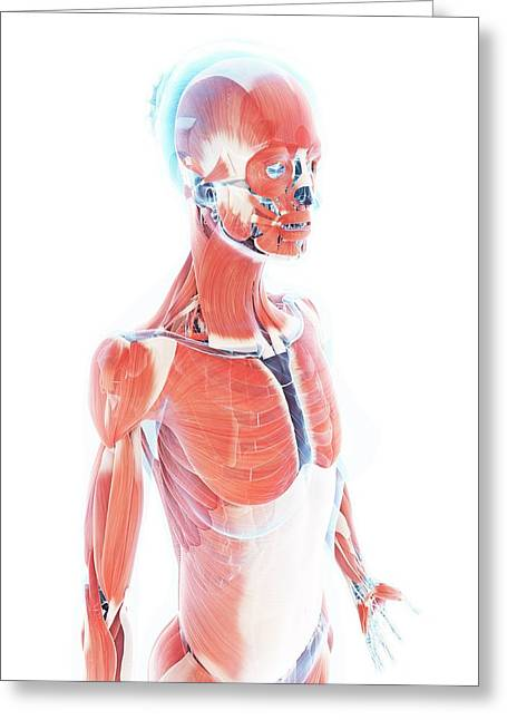 Female Muscular System Greeting Card
