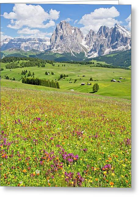 Flowery Alpine Meadow Greeting Card by Bob Gibbons