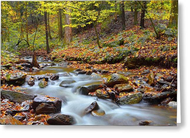Forest Stream In Autumn Greeting Card