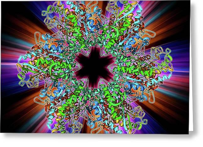 Glutamine Synthetase Enzyme Greeting Card