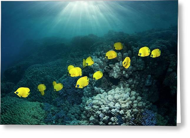 Golden Butterflyfish Greeting Card