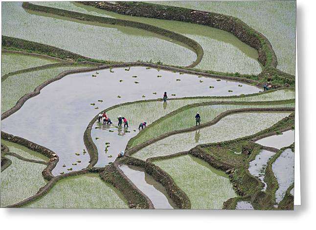 Hani Rice Terraces Near Yuanyang Greeting Card by Tony Camacho
