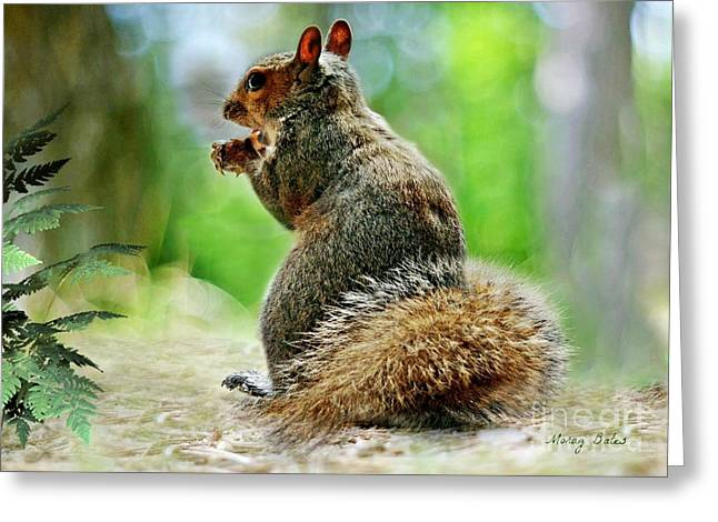 Harry The Squirrel Greeting Card
