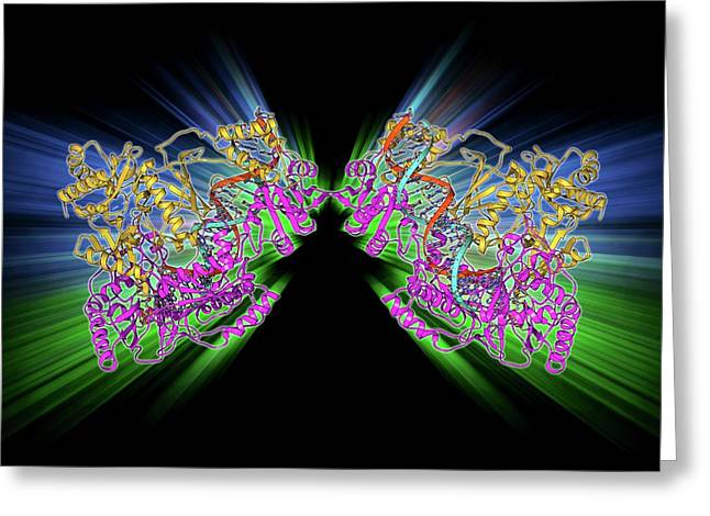Hiv Reverse Transcription Enzyme Greeting Card by Laguna Design