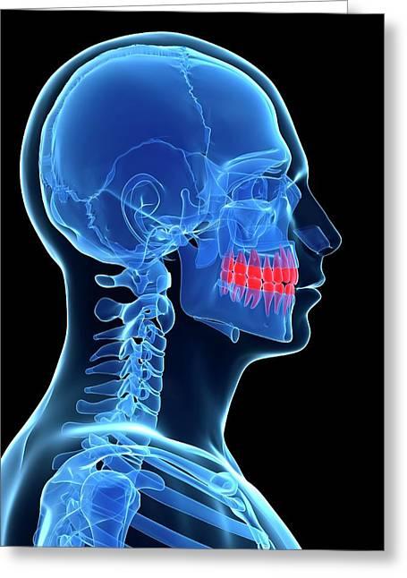 Human Teeth Greeting Card by Sebastian Kaulitzki