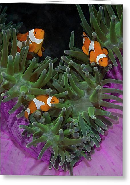 Indonesia, Raja Ampat Greeting Card by Jaynes Gallery