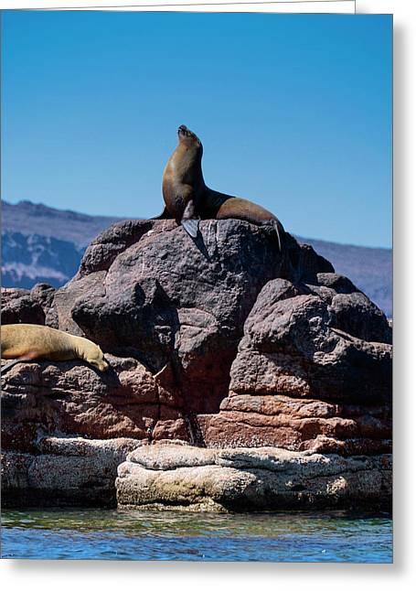 Isla De Espiritu Santo, Baja, Mexico Greeting Card
