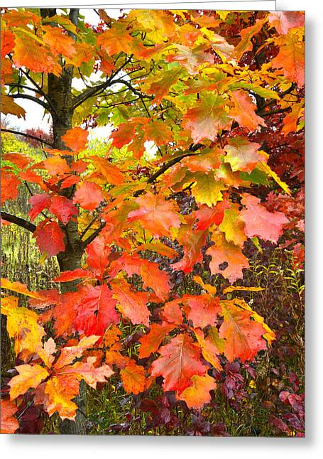 Mchenry County Fall Color Greeting Card by Ray Mathis