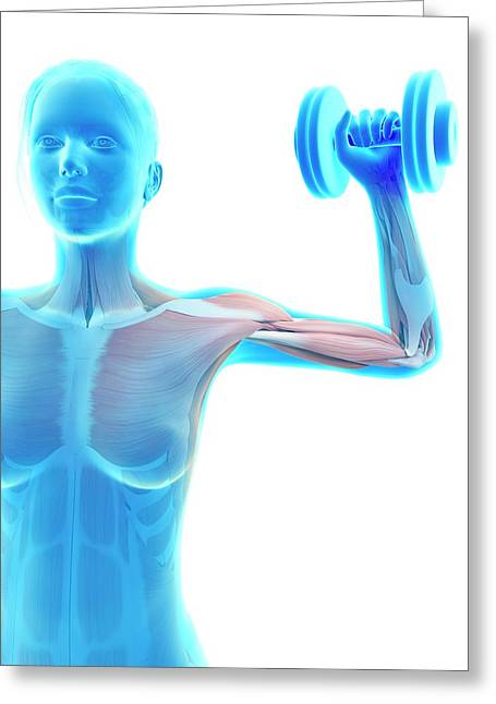 Muscles Of Weight Lifter Greeting Card by Sebastian Kaulitzki