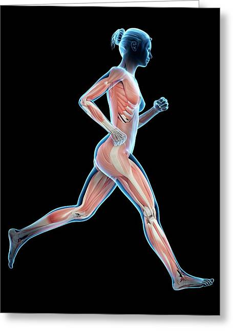 Muscular System Of A Runner Greeting Card
