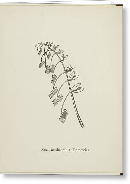 Nonsense Botany Collection By Edward Lear Greeting Card