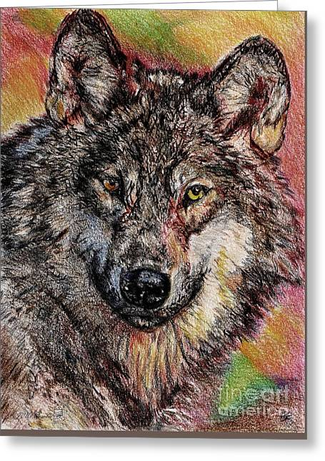 Portrait Of A Gray Wolf Greeting Card by J McCombie