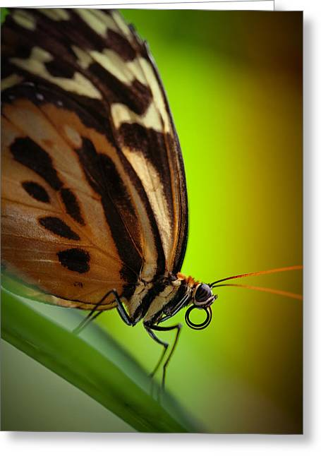 Greeting Card featuring the photograph Resting Butterfly by Zoe Ferrie