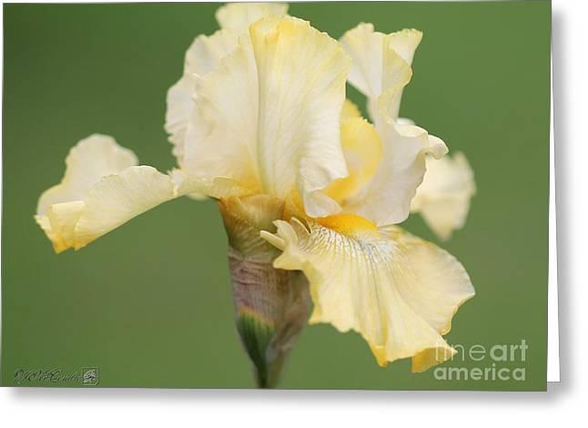 Tall Bearded Iris Named Again And Again Greeting Card