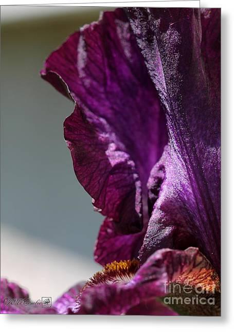 Tall Bearded Iris Named Rosalie Figge Greeting Card