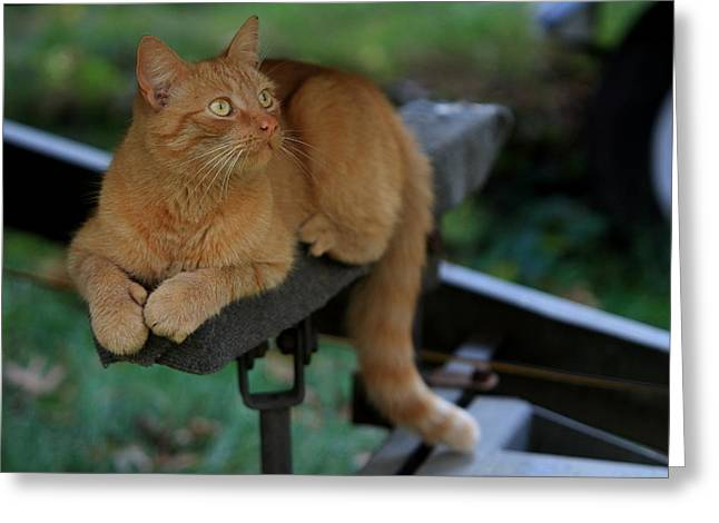 5-toe'd Orange Cat Of The Marina Greeting Card