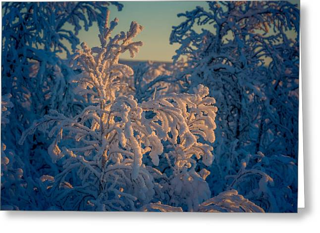 Trees In The Frozen Landscape, Cold Greeting Card by Panoramic Images