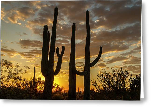 Usa, Arizona, Saguaro National Park Greeting Card by Jaynes Gallery