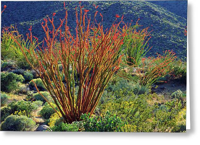 Usa, California, Anza-borrego Desert Greeting Card by Jaynes Gallery
