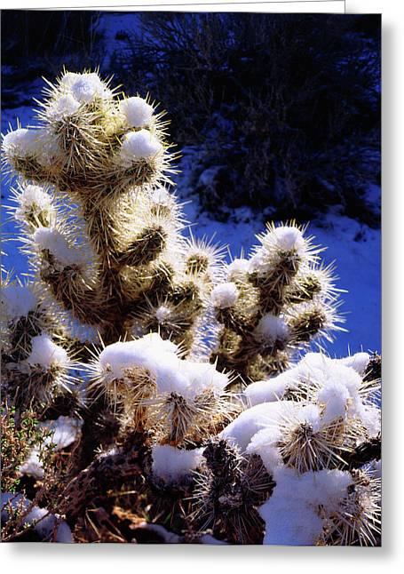 Usa, California, Joshua Tree National Greeting Card