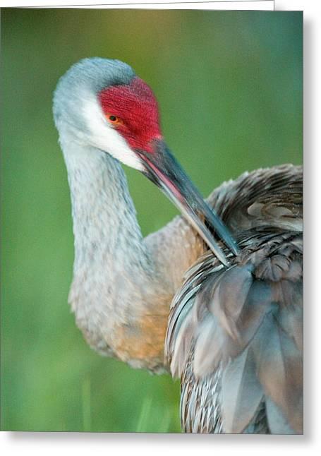 Usa, Florida, Indian Lake Estates Greeting Card by Jaynes Gallery