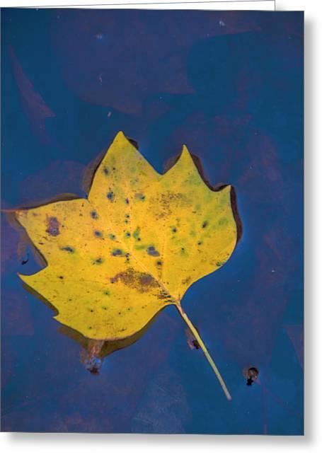 Usa, Virginia, Mclean Greeting Card by Jaynes Gallery