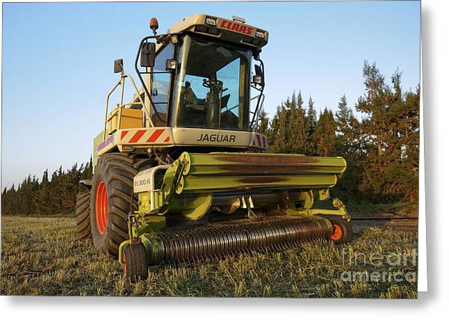 Wheat Harvest For Silage Greeting Card by PhotoStock-Israel