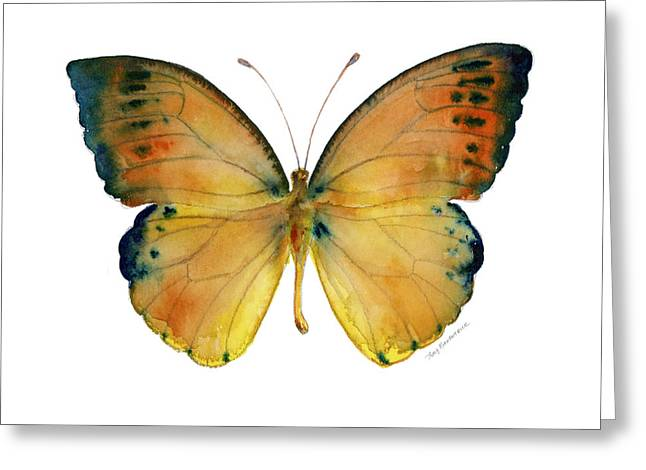 53 Leucippe Detanii Butterfly Greeting Card