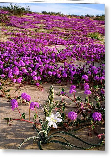 Usa, California, Anza-borrego Desert Greeting Card
