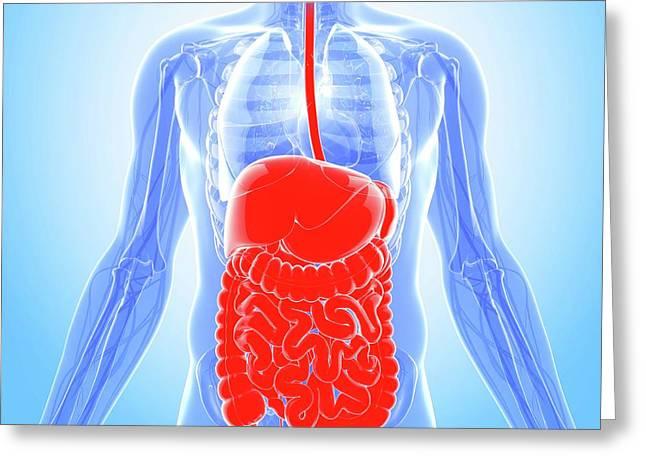 Human Digestive System Greeting Card by Pixologicstudio