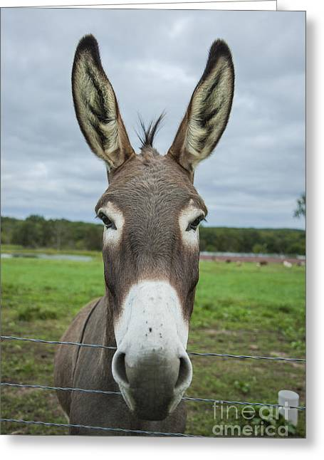 Animal Personalities Friendly Quirky Donkey Face Close Up Greeting Card by Jani Bryson