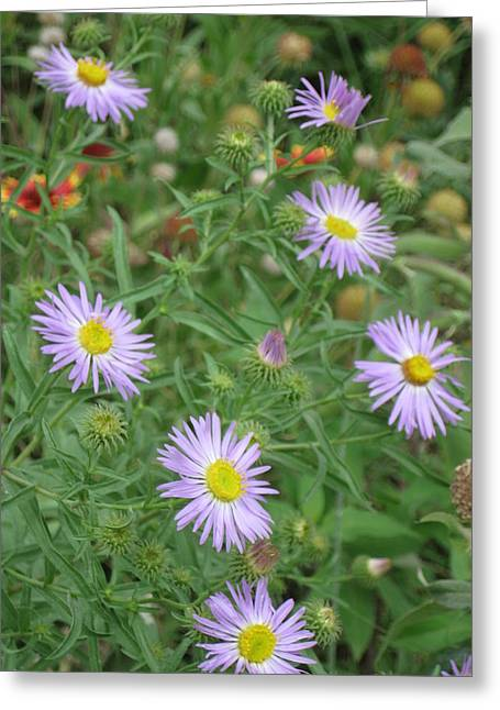 6 Asters Left Greeting Card