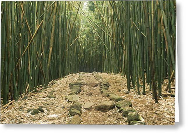 Bamboo Forest, Oheo Gulch, Seven Sacred Greeting Card by Panoramic Images