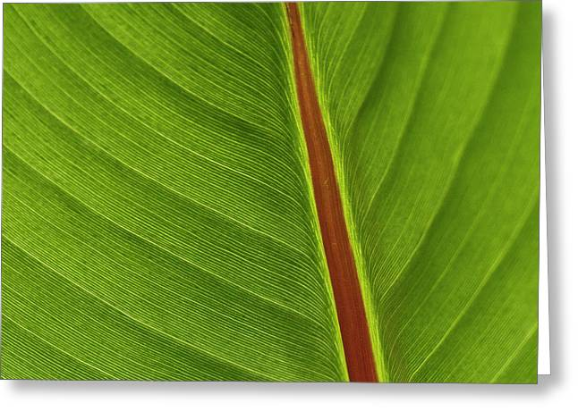 Banana Leaf Greeting Card by Heiko Koehrer-Wagner