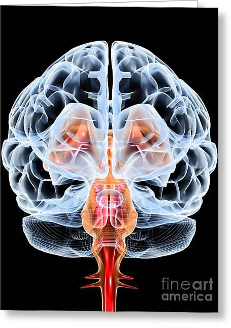 Brain, Artwork Greeting Card