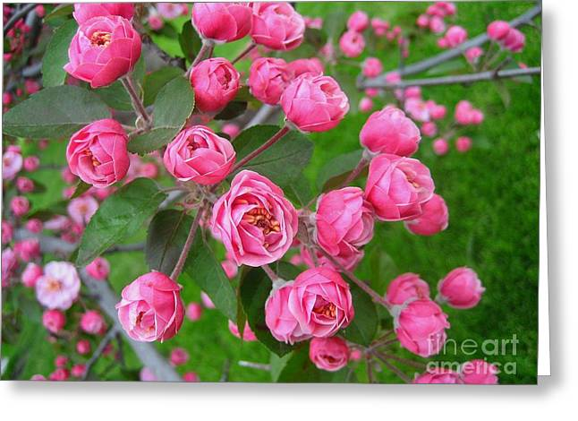 Color Of The Spring Greeting Card