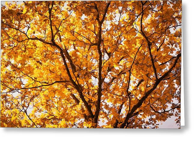 Fall Foliage Great Smoky Mountains Painted    Greeting Card