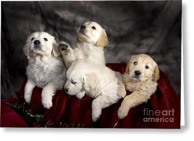 Festive Puppies Greeting Card by Angel  Tarantella
