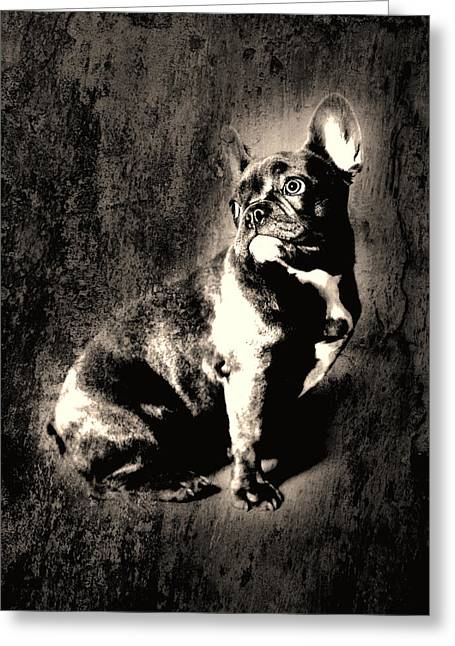 French Bulldog Greeting Card by Falko Follert