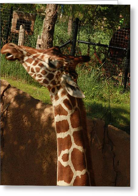 Giraff Greeting Card by Tinjoe Mbugus