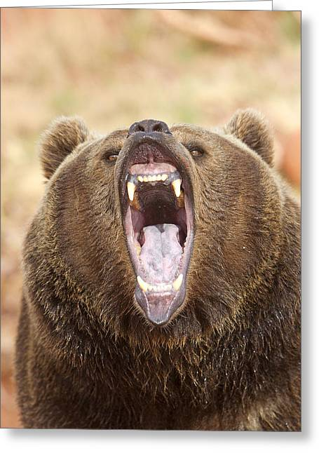 Grizzly Bear Greeting Card by M. Watson