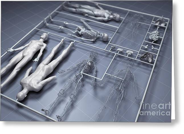 Human Cloning Greeting Card by Science Picture Co