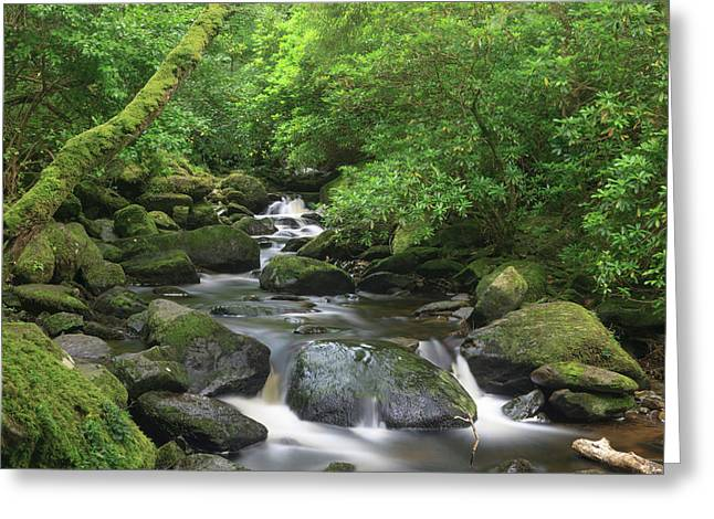 Killarney National Park, County Kerry Greeting Card