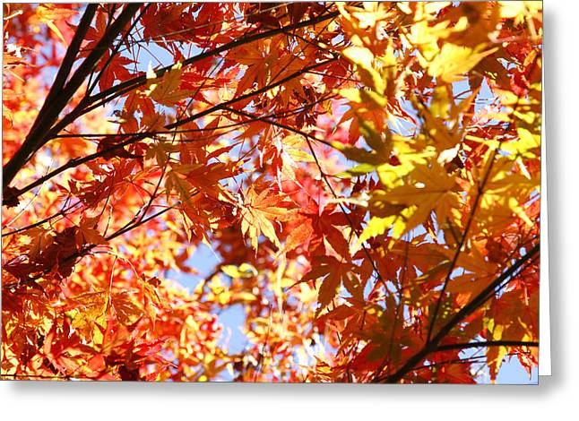 Leaves Greeting Card by Les Cunliffe